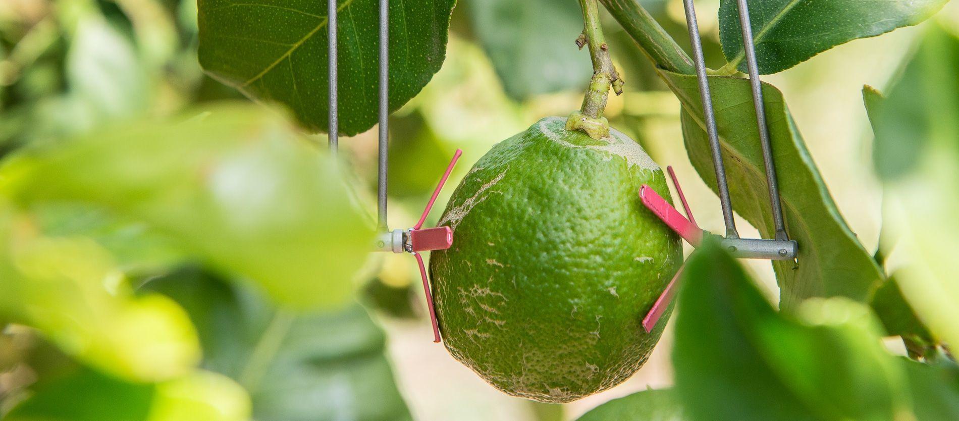 SupPlant raises $10 million for affordable irrigation for smallholder farmers - Impact Alpha